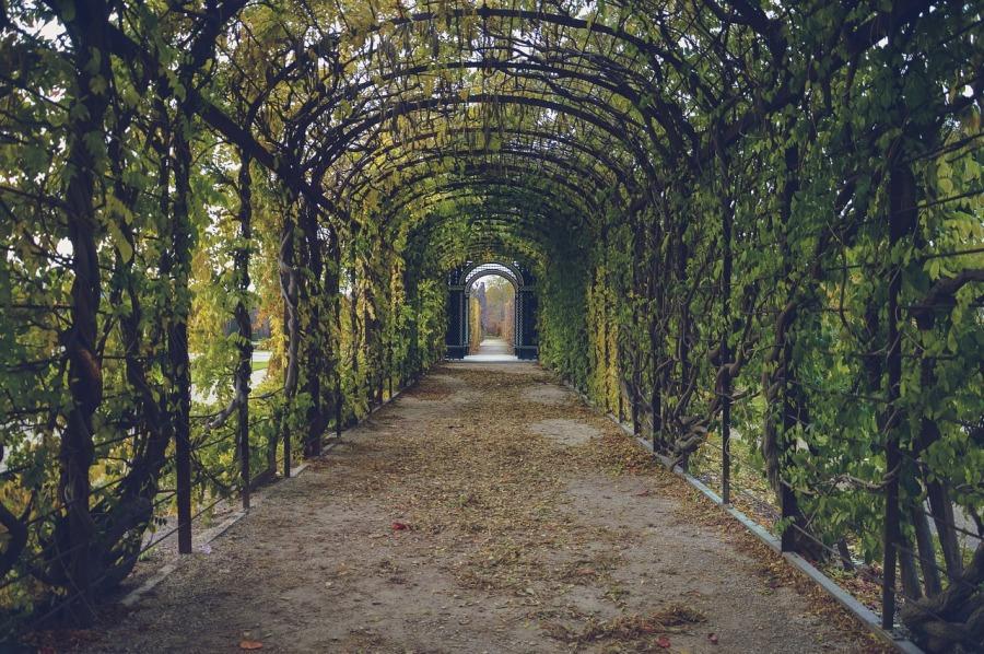 garden-1284324_1280