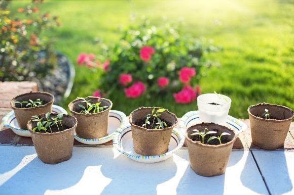 seedlings-2708679_1920