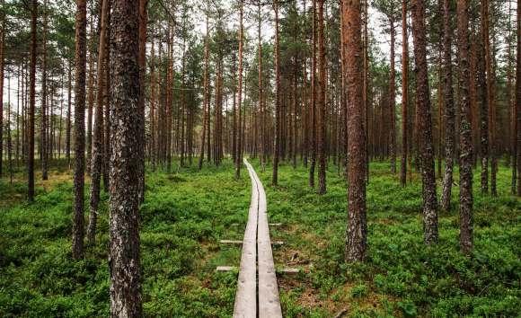 daylight environment forest grass