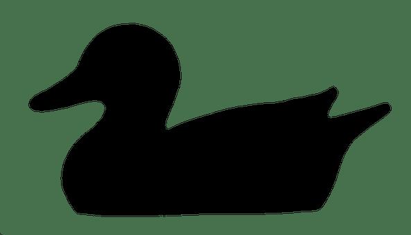 duck-2804915__340